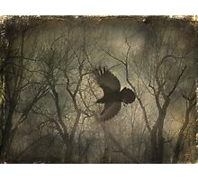 Forest Raven Photographic Print