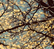 Drops of Sunlight  by Ruta Rudminaite
