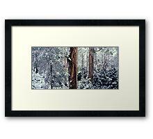 Silent Forest Framed Print