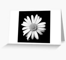 Pushing daisies Greeting Card