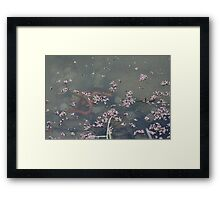 California Newts 2 Framed Print