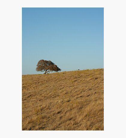 Lone oak Photographic Print
