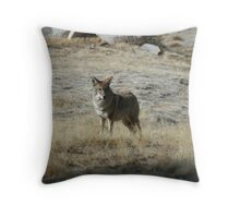 Coyote 1 Throw Pillow