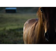 friend Photographic Print