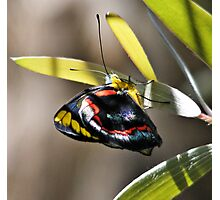 Multicolored Butterfly Photographic Print