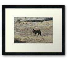 Coyote 3 Framed Print