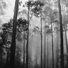 Misty forest NSW by klaartje