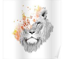 If I roar Poster
