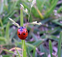 Bright Red Ladybug by Kimberly Johnson