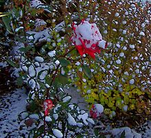 For Alyson - First Snow by Jarda