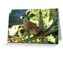 Hungry Hopper Greeting Card