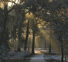 Starting out on a dream morning: 23rd December 2007 by jchanders