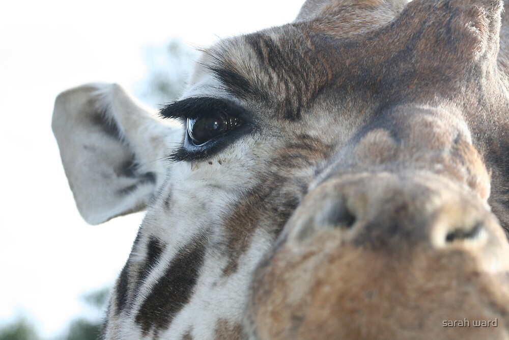 Up Close And Personal by sarah ward