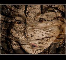 Sequoia Spirit by donnio