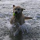 montie the water dog by ben14