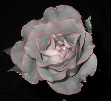 As Sweet As a Rose by Liz Mardis