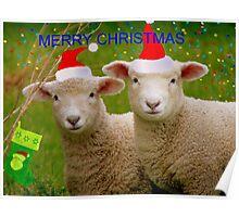 Merry Christmas - Lambs - NZ Poster