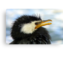 Does It Make Any Difference! - Shag/Cormorant - Queenstown NZ Canvas Print