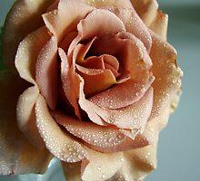 rose by wildrider58