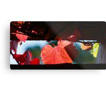 Grape Leaves In Autumn Metal Print
