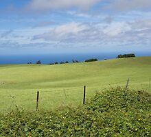 Kohala countryside by Anne Scantlebury