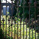 No one lives here anymore by Rosina  Lamberti