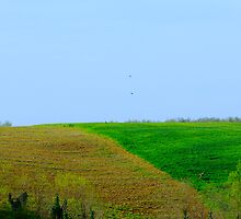 Simply Tuscan II by Ashley Ng