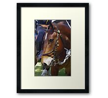 Gallant Steed Framed Print