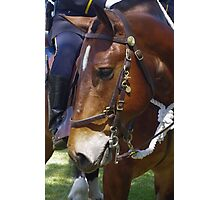 Gallant Steed Photographic Print
