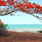 Flame Tree by Wayne Holman