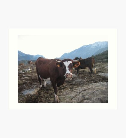 Happy cows ! Art Print