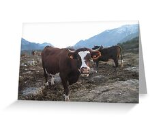Happy cows ! Greeting Card