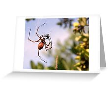Spiders packed lunch..revised Greeting Card