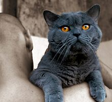 Beautiful cat by JudyBJ