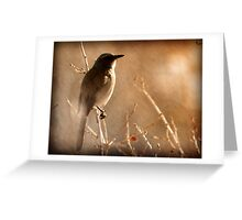 Scrub Jay - Winter Tree Greeting Card