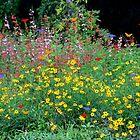 Butterfly Garden by Rosalie Scanlon