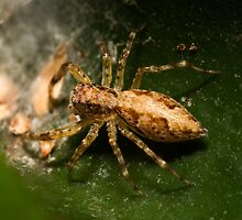Spider by Colin  Ewington
