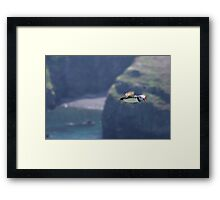 Puffin on the Wing Framed Print