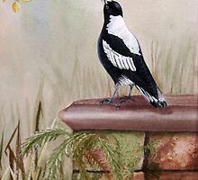Magpie meditation by Denise Martin