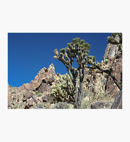Kessler Peak, CA Photographic Print