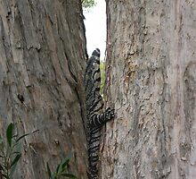 goanna up tree by barnesy64