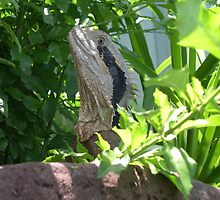 dragon in garden by barnesy64