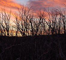 Wallace Hut Sun Set by rendoyle