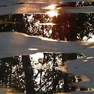 Tree Reflections in After-the-Rain Puddles by kenspics