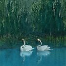 Swan Lake by Walter Colvin