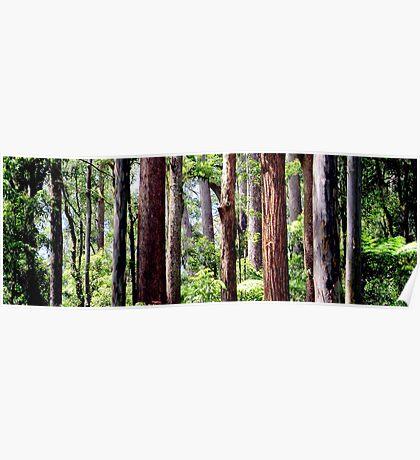 Coastal Rainforest Poster
