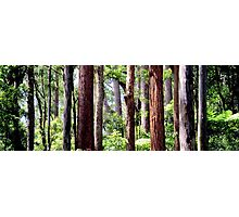 Coastal Rainforest Photographic Print