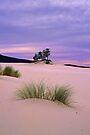 Barracoota Dunes by Travis Easton