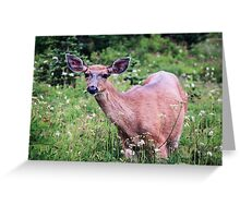 Grazing Deer at Mount Rainier Greeting Card