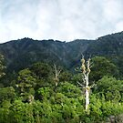 Rimutaka Forest by Evan F.E. Lole